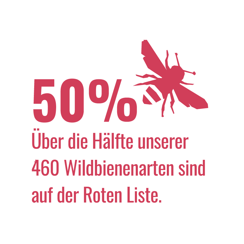 VA_Infografik_Wildbienen_Rote_Liste